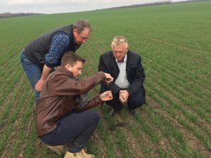 observateur dans les champs de blé