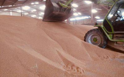 Faut-il stocker son blé pour bien le vendre ?